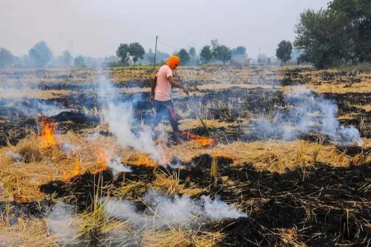 Stubble burning cases in Punjab 44% more this year than 2019, Centre submits report to SC