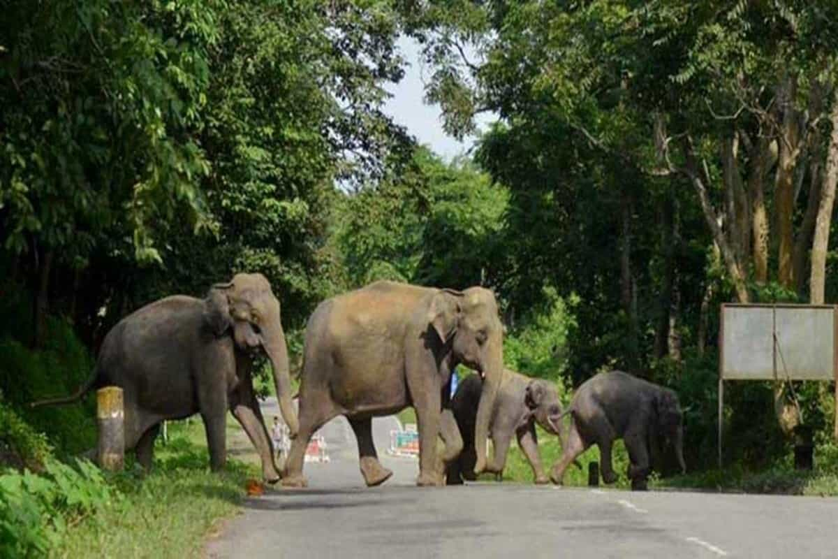 Assam electric fences take toll, pregnant elephant latest casualty