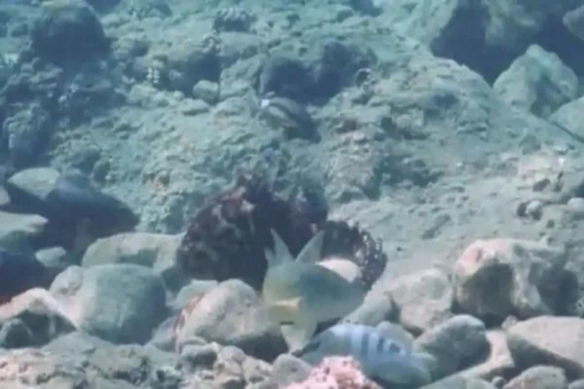 Partners, not friends: Sometimes, octopus punches fish for no reason   Research