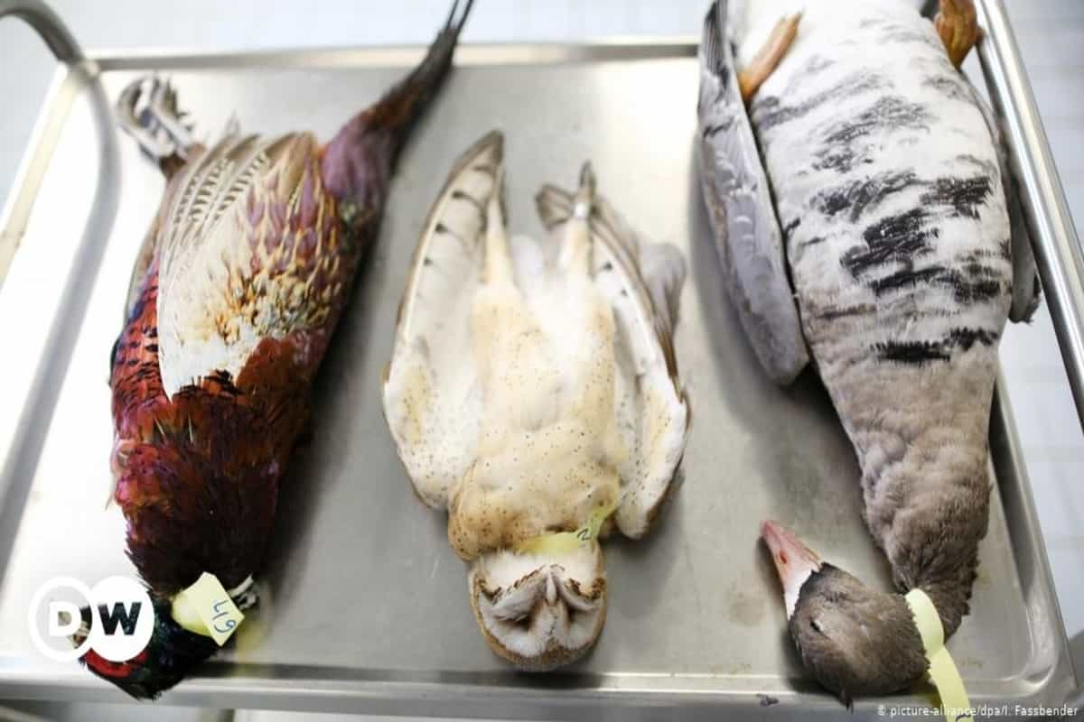 Bird flu spreads to forests, triggers concerns about safety of endangered species